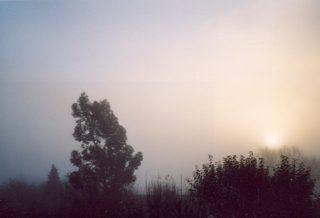 11 Dec at 9am. A misty morning   Janet Vann