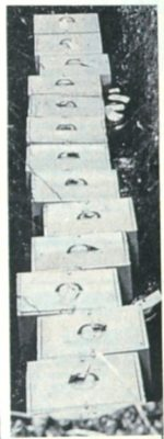 The row of neat blue painted boxes which contain the remains of some ealier members of some well known Hatfield families | Welwyn Times and Hatfield herald 17 December 1965 page 27