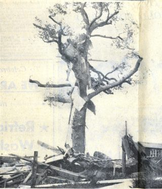 Roofing ripped from houses, flew through the air and landed in the branches of a tree | Herts Advertiser 8 November 1957 page 3
